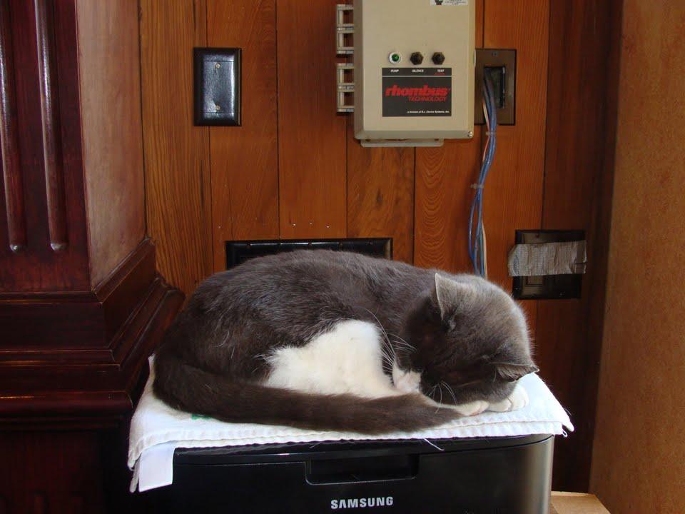 Smokey The Cat - King of Morgan Hill Cellars