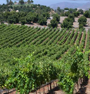 Vineyards in the Ramona Valley