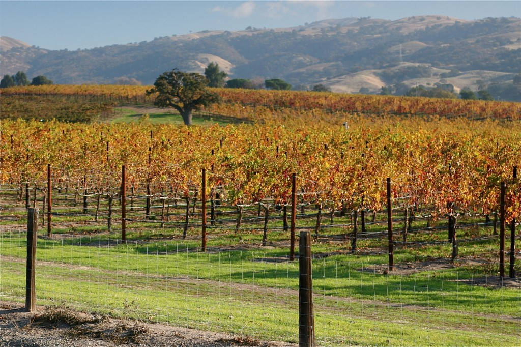 Autumn in the Livermore Valley