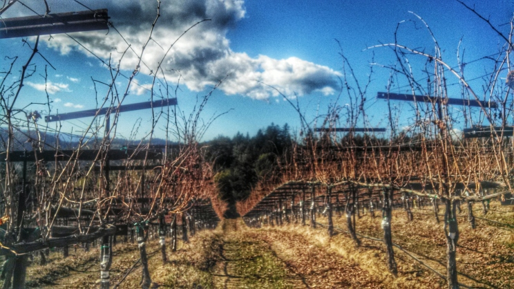 Burrell School Vineyards