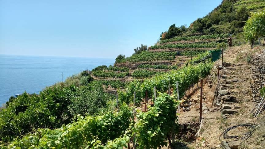Wine Terraces Cinque Terre